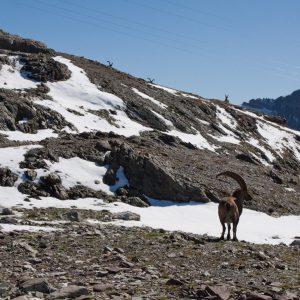 Col de la Terasse Mont Blanc Chamonix Alpen